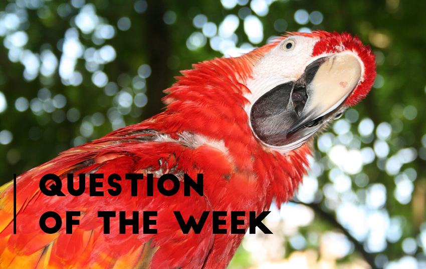 Picture of a bright red Mackaw parrot looking, head titled, with his face to the camera. Caption on top reads question of the week.