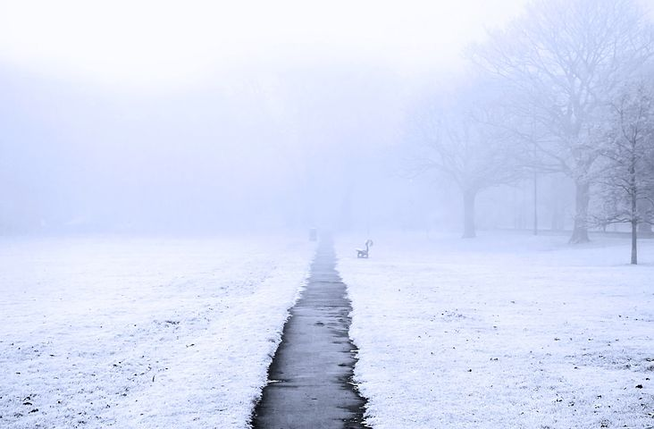 Snowy foggy scene in the park