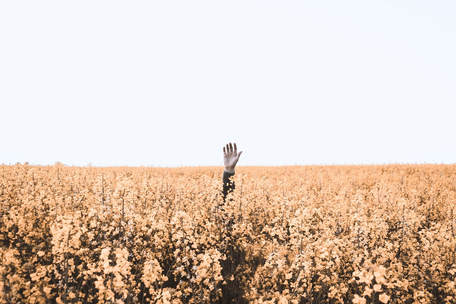 A field of hay and a solitary hand is held up in the middle