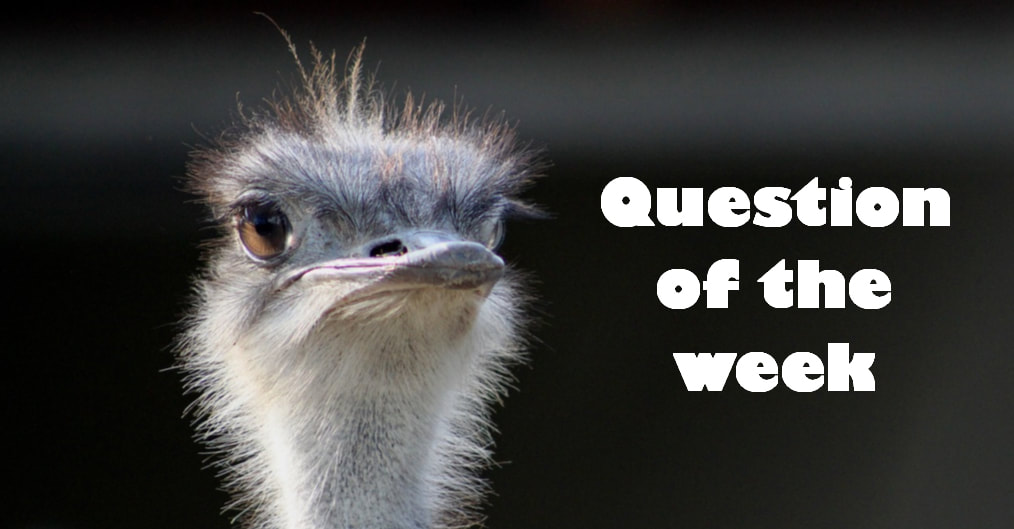 Question of the week banner with an ostrich head looking at you